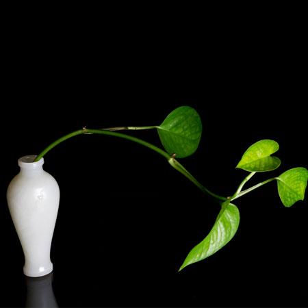 白玉籽料-净瓶